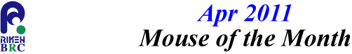 mouse_of_month_201104