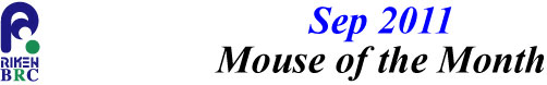 mouse_of_month_201109