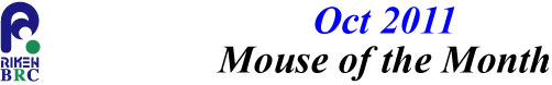 mouse_of_month_201110