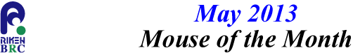 mouse_of_month_201305
