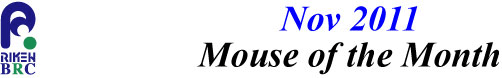mouse_of_month_201111